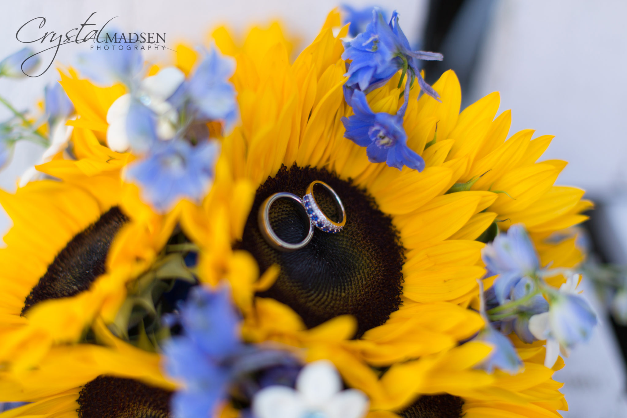 Wedding rings in a sunflower