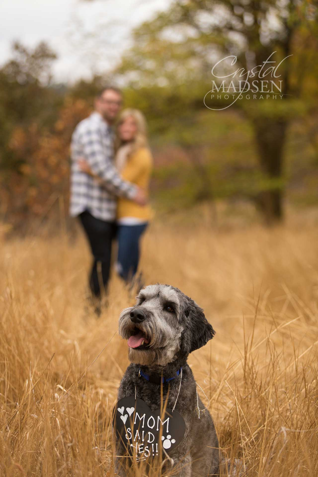 Photo Shoot Ideas With Dogs