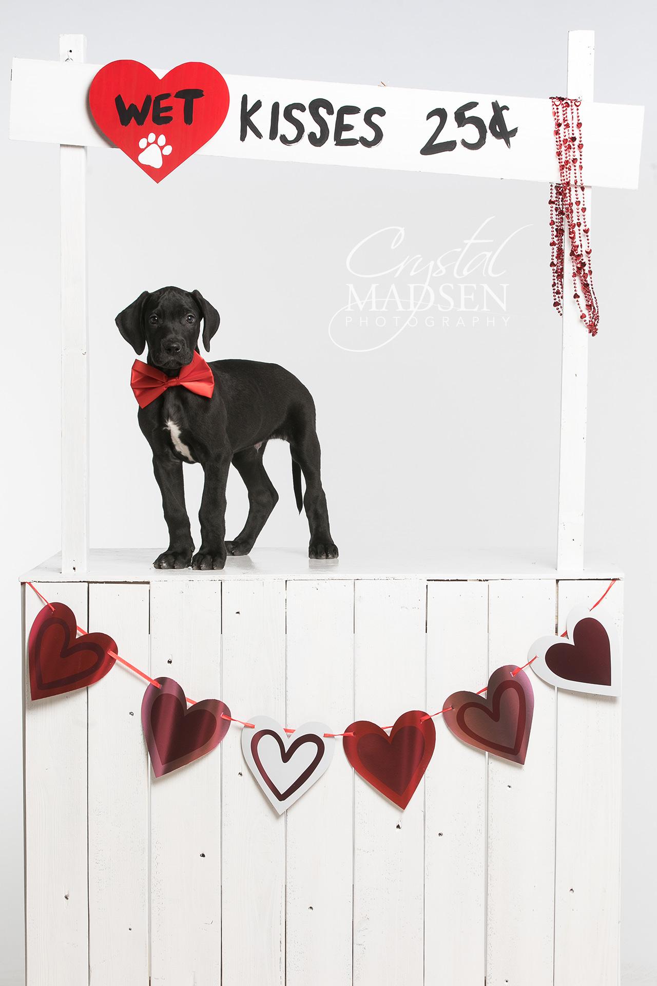 Valentine's Day Puppy Photo Shoot