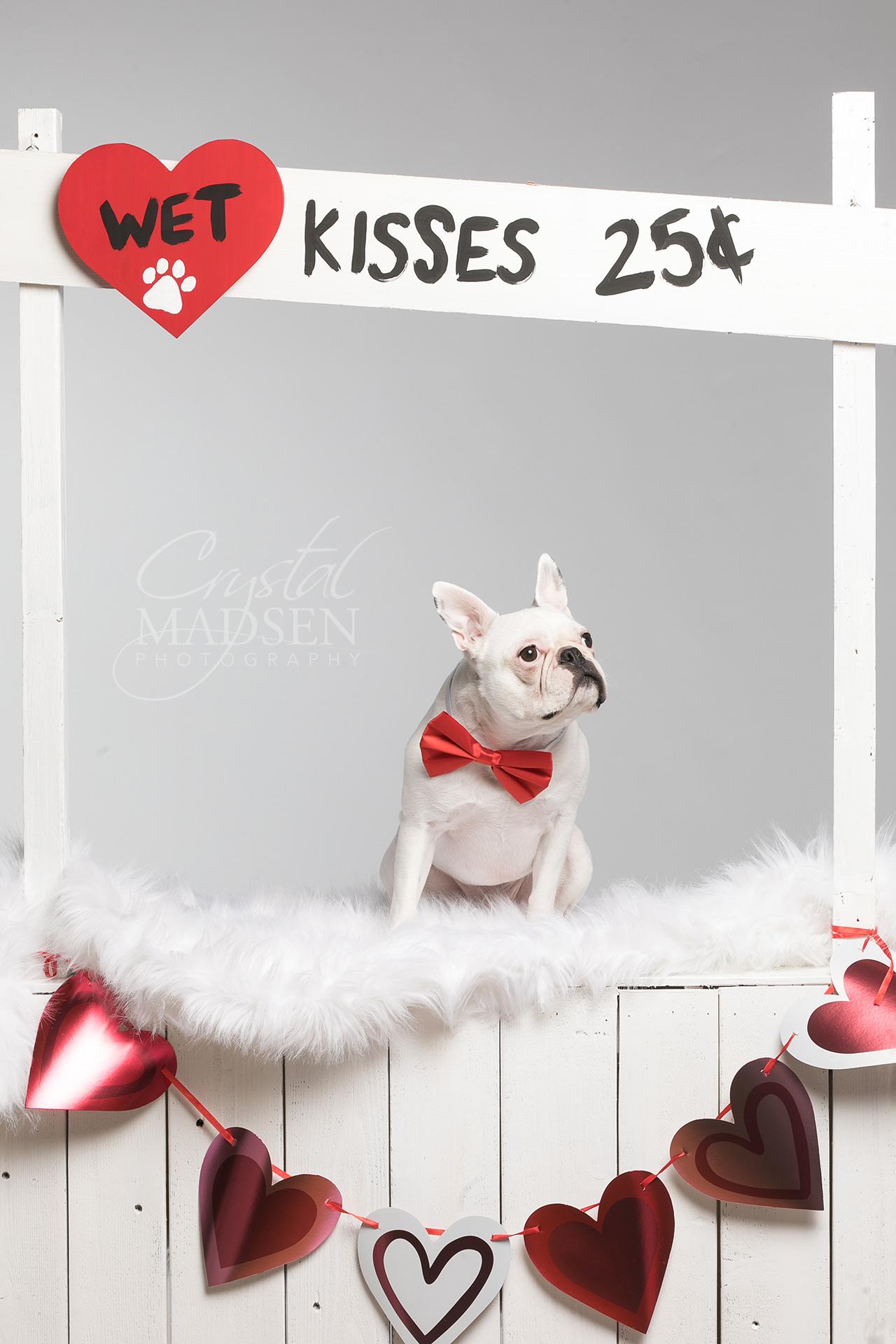 Valentine's Day Pet Photo Shoot